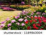 colorful flower in the garden. | Shutterstock . vector #1189863004