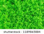green background. grass heather.... | Shutterstock . vector #1189865884