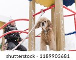 portrait of cocker spaniel... | Shutterstock . vector #1189903681