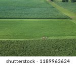 an amish farmer and his four... | Shutterstock . vector #1189963624