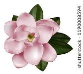 beautiful light magnolia flower ... | Shutterstock .eps vector #1190008594