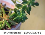 succulent plants in patio... | Shutterstock . vector #1190022751
