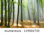 Stock photo autumn dawn in forest 119002735