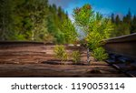a close up view of a small pine ... | Shutterstock . vector #1190053114