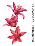 beautiful bouquet lilies  red... | Shutterstock . vector #1190093464