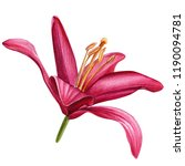 beautiful lily  red flower on... | Shutterstock . vector #1190094781