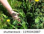 works in the garden. weeding... | Shutterstock . vector #1190342887