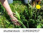 works in the garden. weeding... | Shutterstock . vector #1190342917