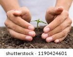 hand protect small plant grow...   Shutterstock . vector #1190424601