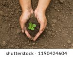hand grow small plant on dry...   Shutterstock . vector #1190424604