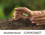 hand protect plant grow on soil ...   Shutterstock . vector #1190424607