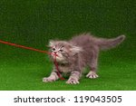 Stock photo cute gray kitten playing red thread on artificial green grass 119043505