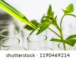 pipette over test tube dropping ... | Shutterstock . vector #1190469214