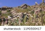 pergamon museum  ruins of... | Shutterstock . vector #1190500417