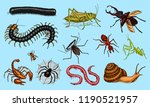 big set of insects. vintage... | Shutterstock .eps vector #1190521957