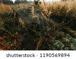 big cowweb among blades in... | Shutterstock . vector #1190569894
