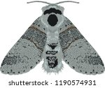 night moth furcula bifida   Shutterstock .eps vector #1190574931