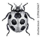 ladybug tattoo art. ladybird... | Shutterstock . vector #1190610667