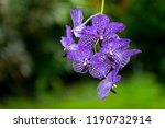 blue orchid with greenery... | Shutterstock . vector #1190732914