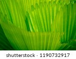 green leaf closeup background | Shutterstock . vector #1190732917