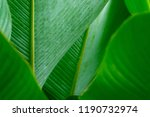 green leaf closeup background | Shutterstock . vector #1190732974