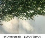 green creeper on old wall   Shutterstock . vector #1190748907