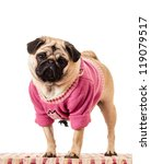 Girl Pug Dog In A Pink Sweater