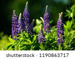 beautiful flower background and ... | Shutterstock . vector #1190863717