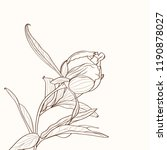 peonies brown sepia outline on... | Shutterstock .eps vector #1190878027