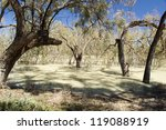 Darling River  In Outback...