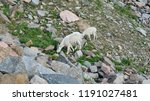 baby and mother mountain goat... | Shutterstock . vector #1191027481