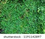 green leaf background | Shutterstock . vector #1191142897