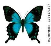 Stock photo papilio lorquinianus sea green swallowtail beautiful bue to green turqouise butterfly of family 1191171577