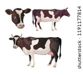 brown spotted cow set. vector... | Shutterstock .eps vector #1191177814
