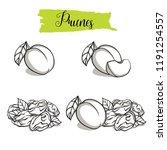 hand drawn sketch style plum... | Shutterstock .eps vector #1191254557