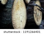 felled trees in a forest close ... | Shutterstock . vector #1191266401