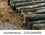 felled trees in a forest | Shutterstock . vector #1191266404