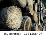 felled trees in a forest close... | Shutterstock . vector #1191266407