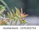 succulent plants in patio... | Shutterstock . vector #1191331714