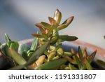 succulent plants in patio... | Shutterstock . vector #1191331807