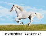 White Horse Runs Gallop On The...