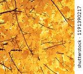 golden autumn leaves on tree | Shutterstock . vector #1191390217