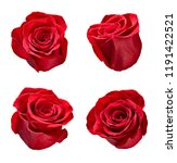Collection Various Roses White Background - Fine Art prints