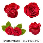Stock photo collection of various roses on white background each one is shot separately 1191423547