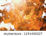 end of summer warm season in...   Shutterstock . vector #1191430327