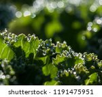 green natural background with... | Shutterstock . vector #1191475951