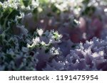 green and pink natural... | Shutterstock . vector #1191475954