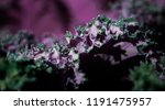 green and pink natural... | Shutterstock . vector #1191475957