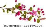 Branch Of Sakura Flowers Side...