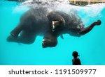 little girl watching playful...   Shutterstock . vector #1191509977